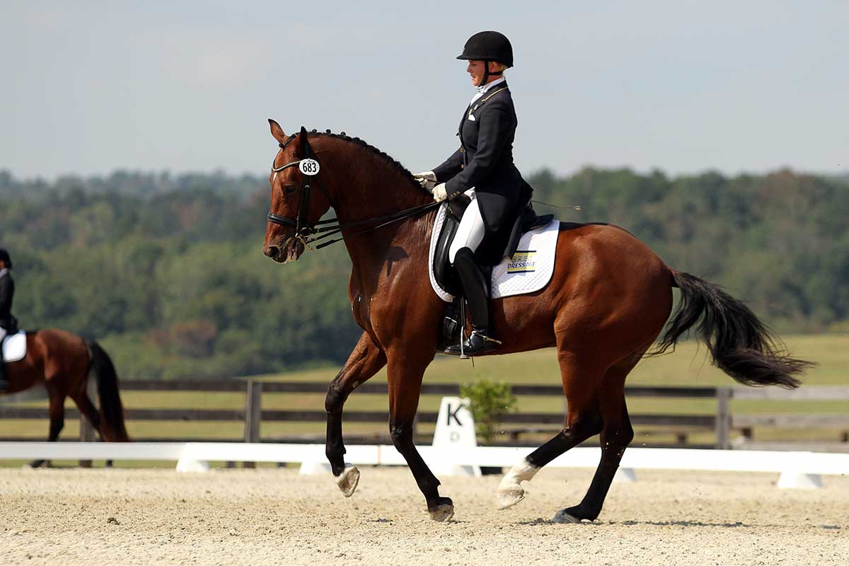 Dressage horse photography images for Horse farm